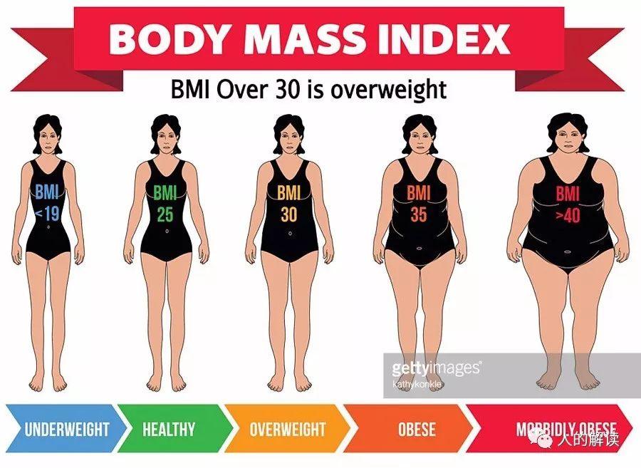 魏斯精读[12] 肥胖的真正原因竟然是这样的-人的解读