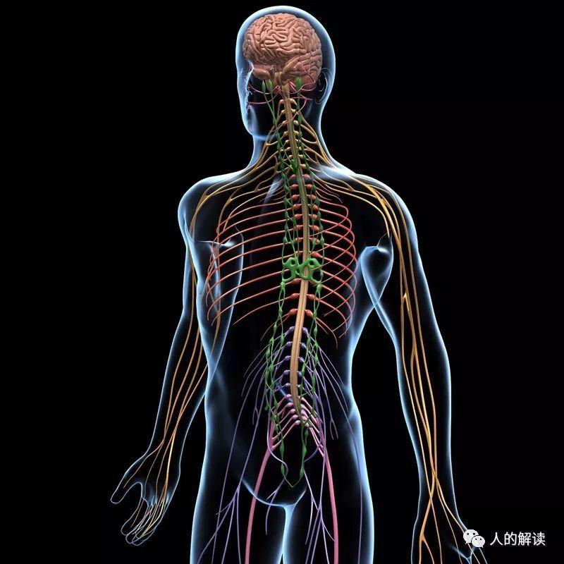 经络系列[01] 经络到底是什么,为何解剖学上找不到?-人的解读