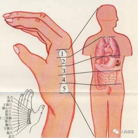 经络系列[03] 经络的全息特性,头痛医脚的道理原来是这样-人的解读
