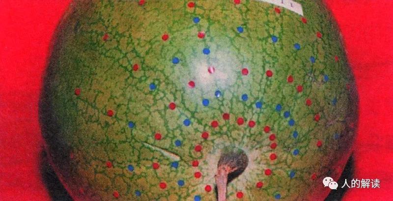 经络系列[06] 植物、动物的经络穴位是怎样的?-人的解读