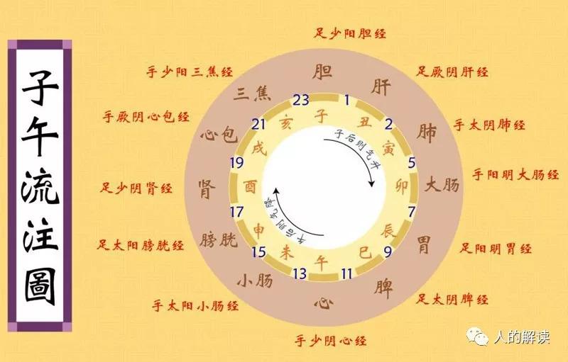 经络系列[07] 子午流注:人人必知的经络运行周期规律-人的解读