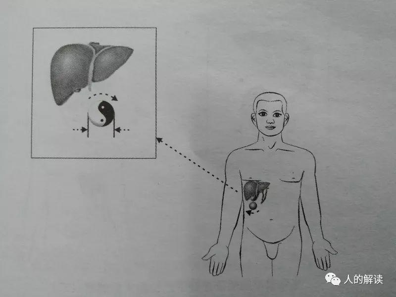 经络系列[15] 药物归经,这或许是中药和西药最大的区别-人的解读